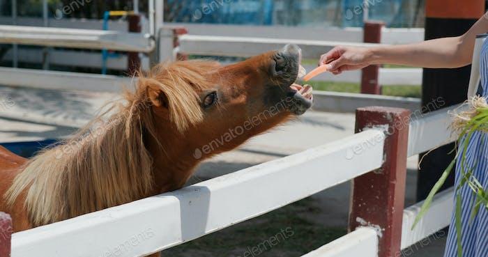 Feed horse in the farm