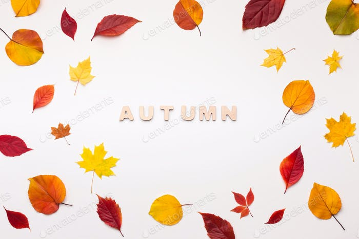Inspirational background of fallen red and yellow leaves on white