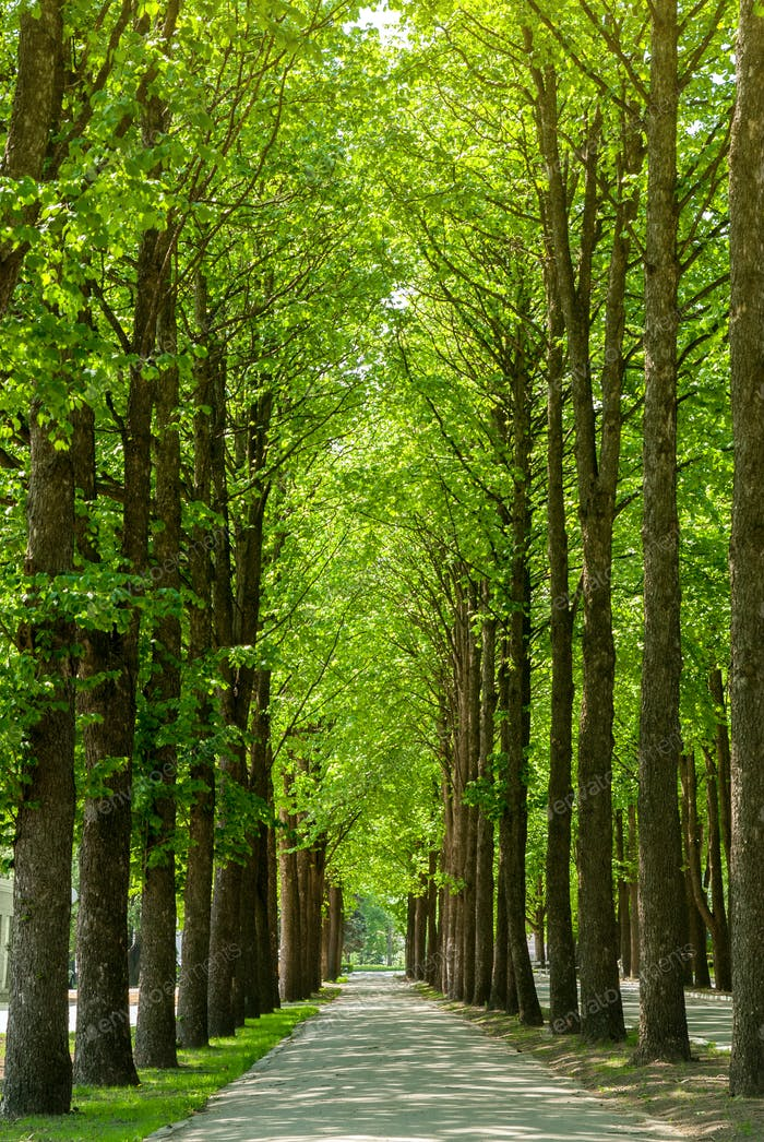 Road in green park