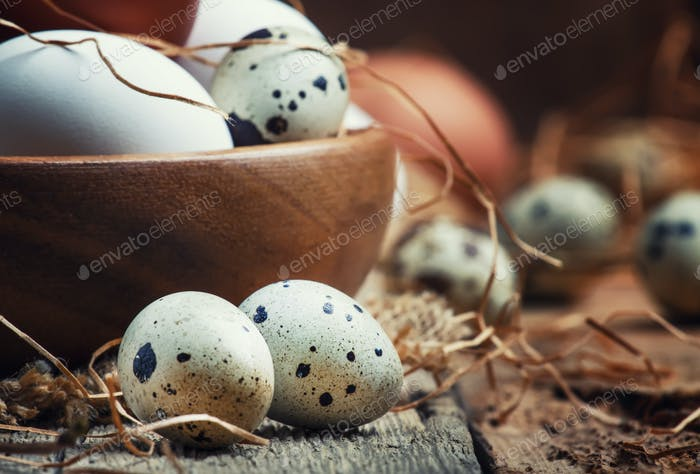 colorful chicken and quail eggs