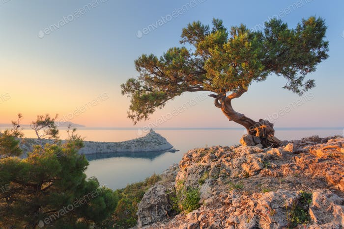 Amazing tree growing out of the rock at sunrise