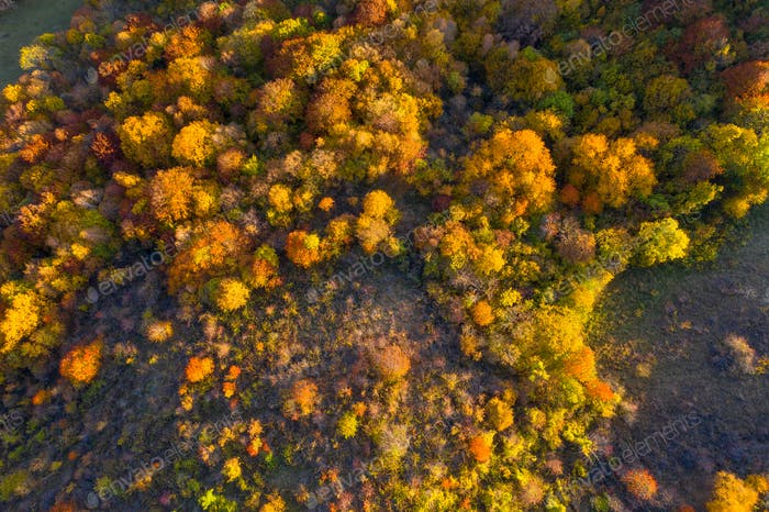 Aerial view of colorful autumn forest from a drone