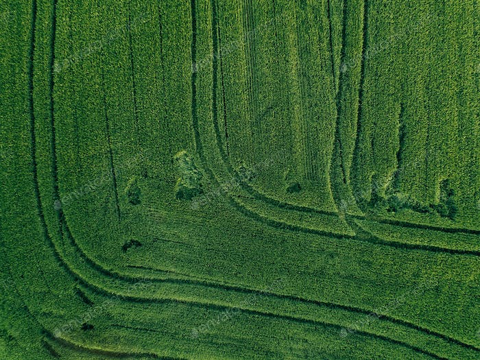 Farmland from above - aerial view of a lush green filed in summer