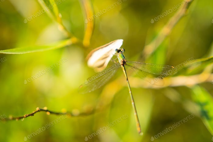 Close up of Dragonfly sitting on rich Green grass
