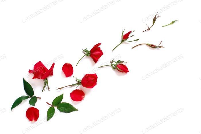 Spring composition with red roses over white background