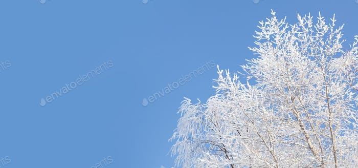 Blauer Winterhimmel und verschneiter Baum