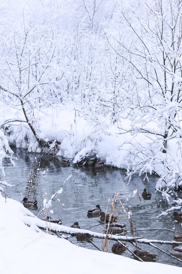 wonderful winter landscape.
