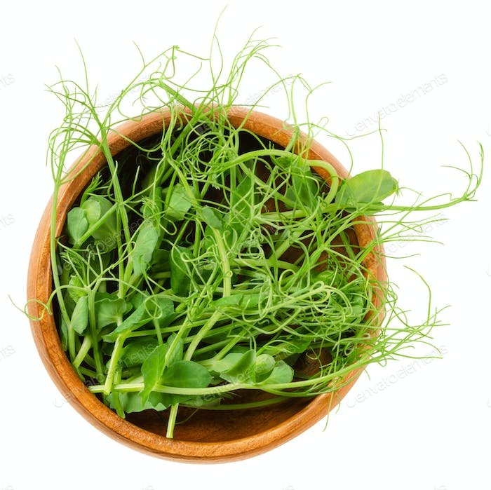 Pea microgreen, green shoots, in wooden bowl