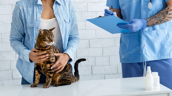 Unrecognizable veterinary doctor writing out prescription for cute tabby cat at medical office