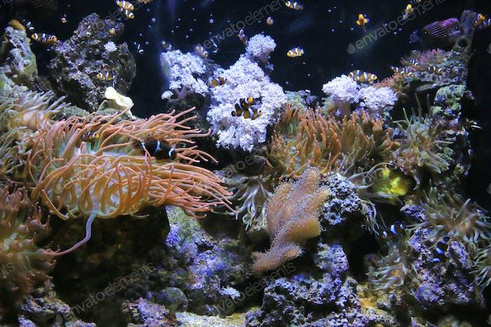 Beautiful underwater life in the aquarium