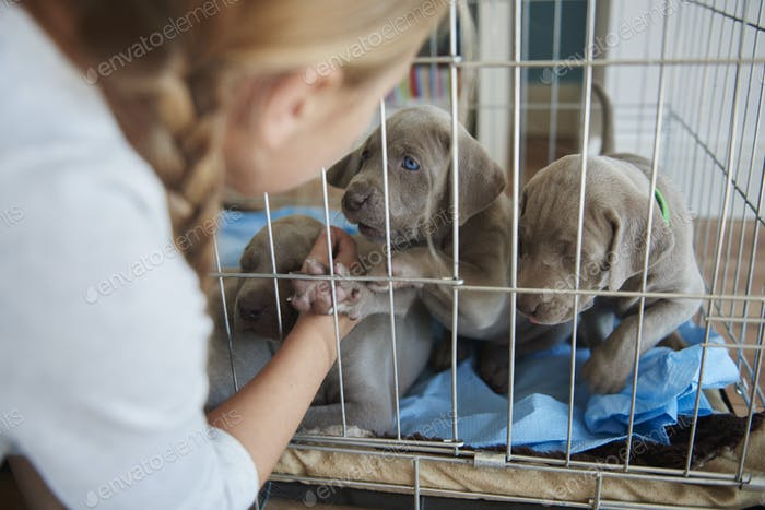 Girl next to the cage with puppies