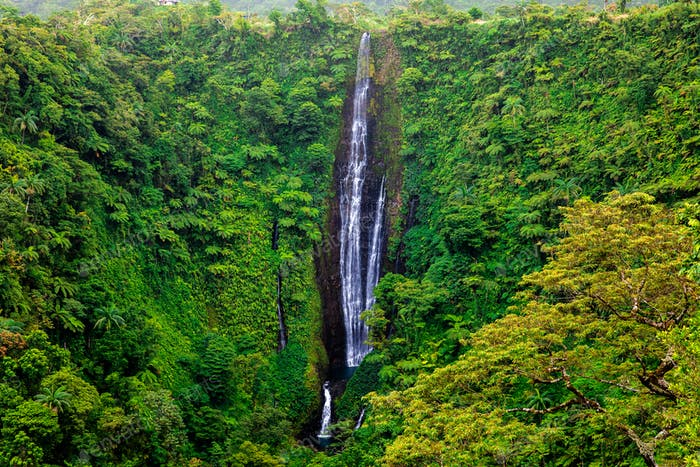 Vibrant tall Papapapaitai falls in the forest of Upolu island, S