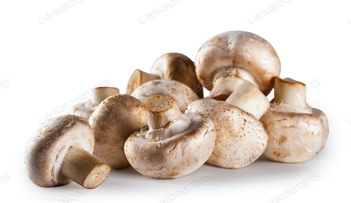 Haufen von rohem Pilz Champignon isoliert auf weißem Hintergrund