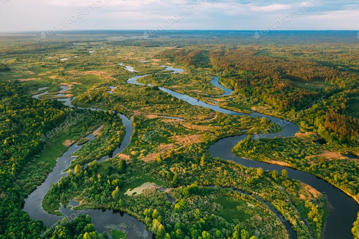 Aerial View Green Forest Woods And River Landscape In Sunny Spri