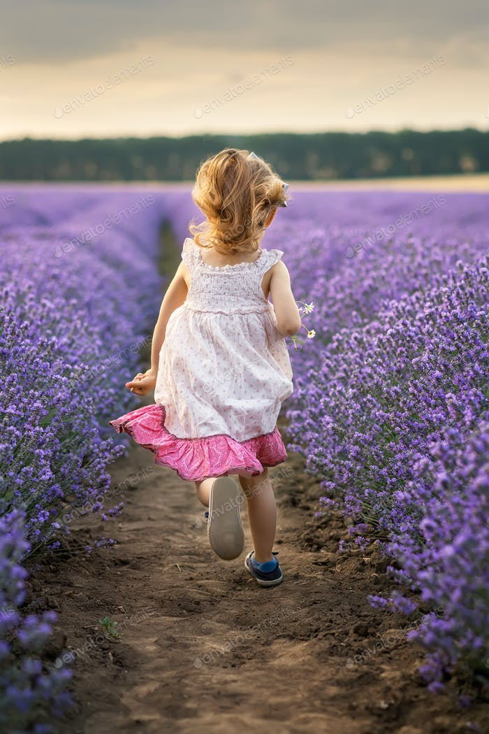 Among the lavender fields