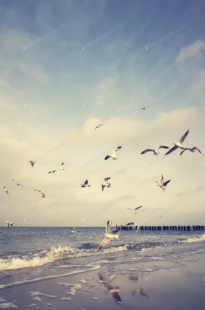 Vintage stylized picture of flying birds at a beach