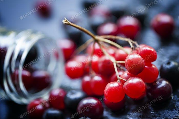 Cranberry, Eberesche, Viburnum, Aronia