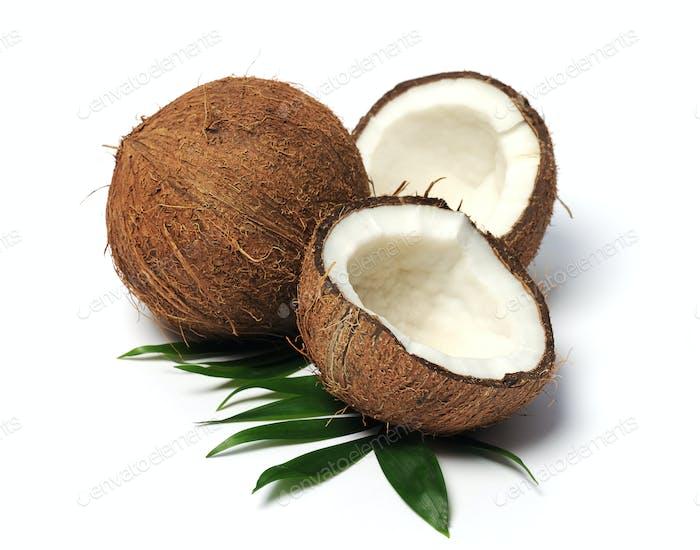 Kokosnuss Nahaufnahme