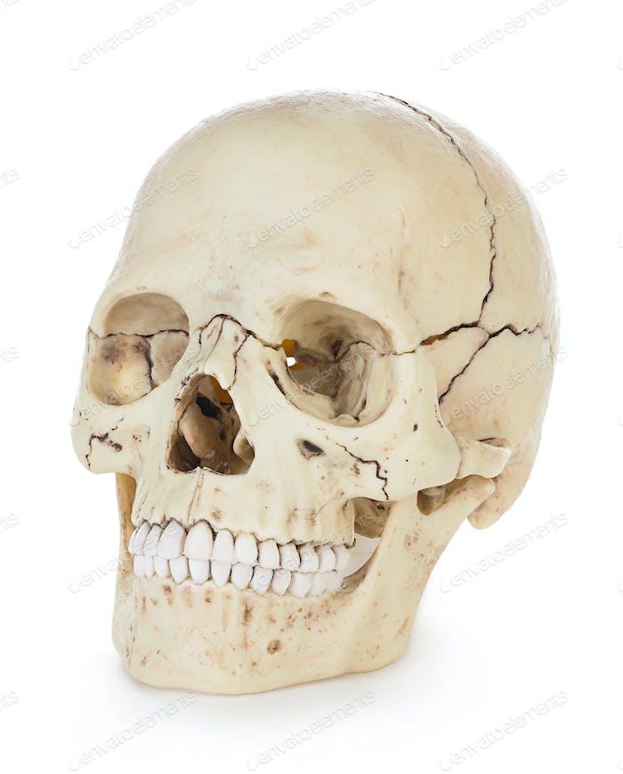 Menschlicher Schädel isoliert auf weißem Hintergrund mit Clipping-Pfad.