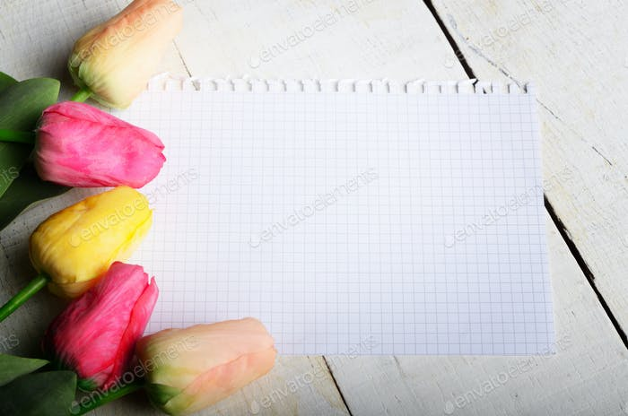 High angle shot of pink rosy and yellow Spring tulip flowers and
