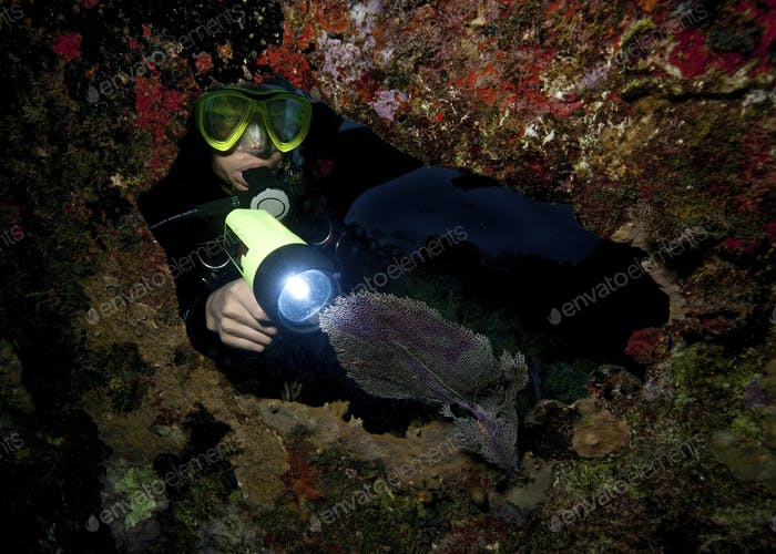 Diver illuminating a sea fan with a flashlight, during a night dive.
