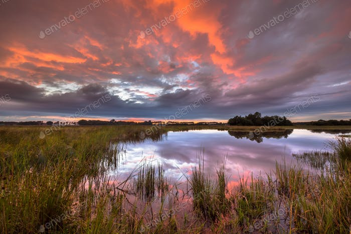Beautiful sunset over marshland in natural landscape