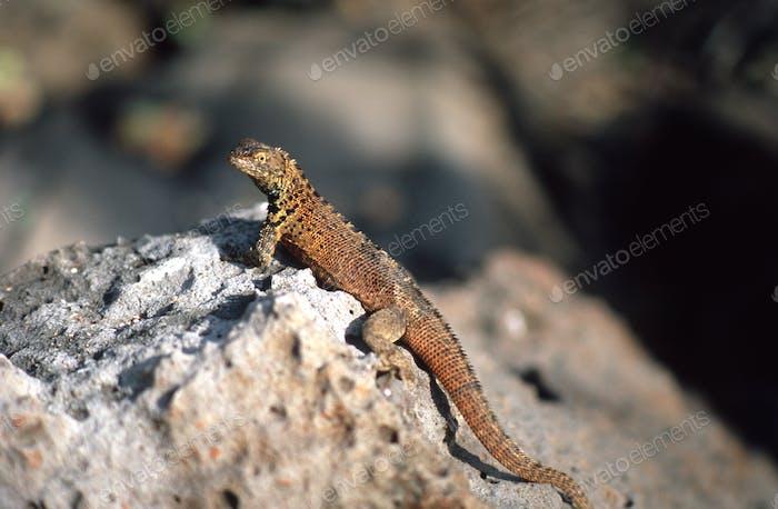 Galapagos0015