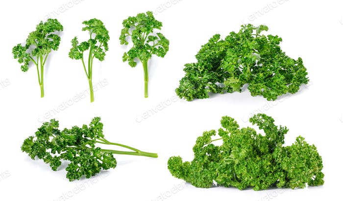 Collection Parsley on white background.