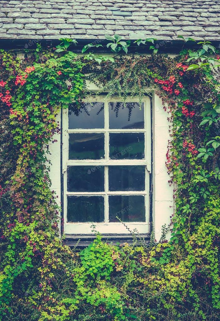 Floral Cottage Window