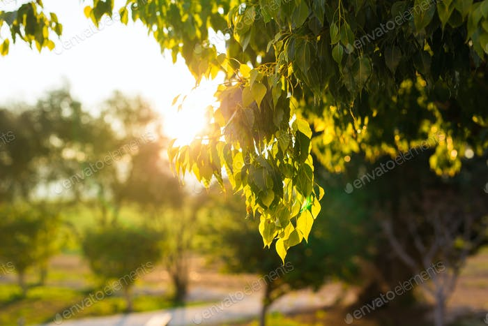 Fresh green leaves on nature framing the sun in the middle and forming rays of light