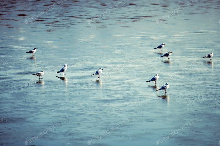 Flock of birds walking on frozen lake