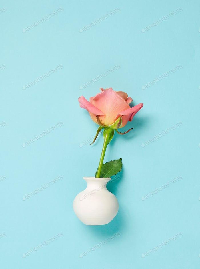 pink rose in white vase on blue background