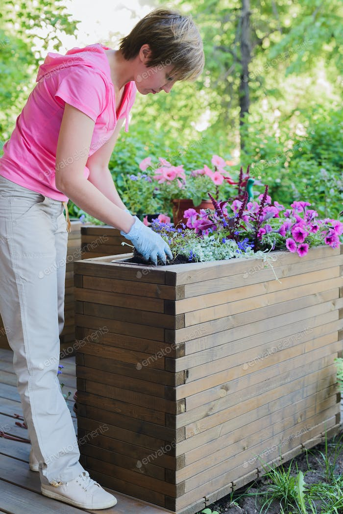 florist plants gardener in wooden container pot