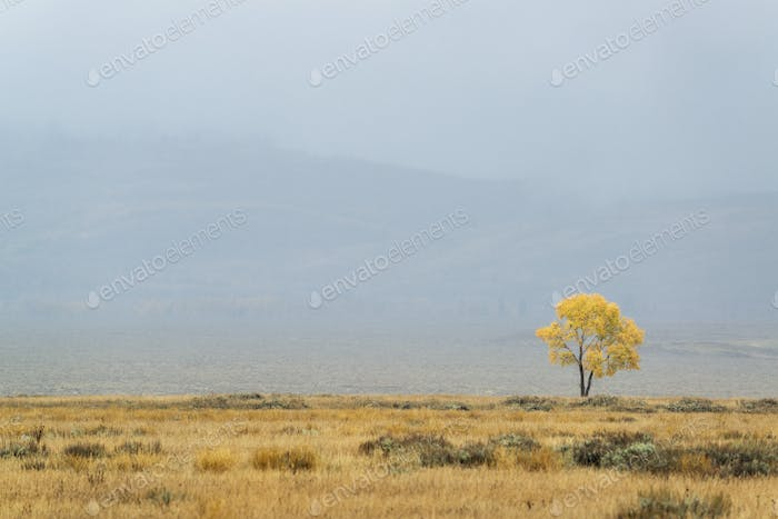 A single tree on the horizon in autumn