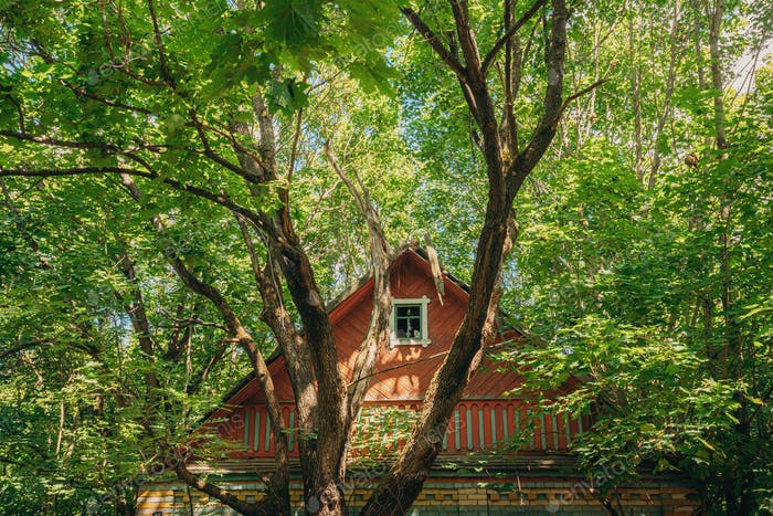 Belarus. Abandoned House Overgrown With Trees And Vegetation In Chernobyl Resettlement Zone