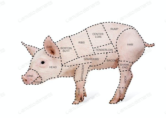 Metzgerschwein-Diagramm