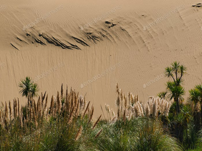 Sand dune background with lush vegetation