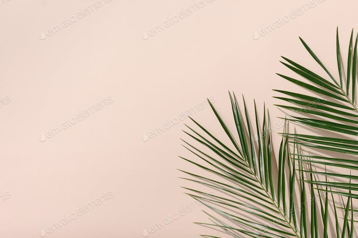 Frame of palm green leaves on pink background