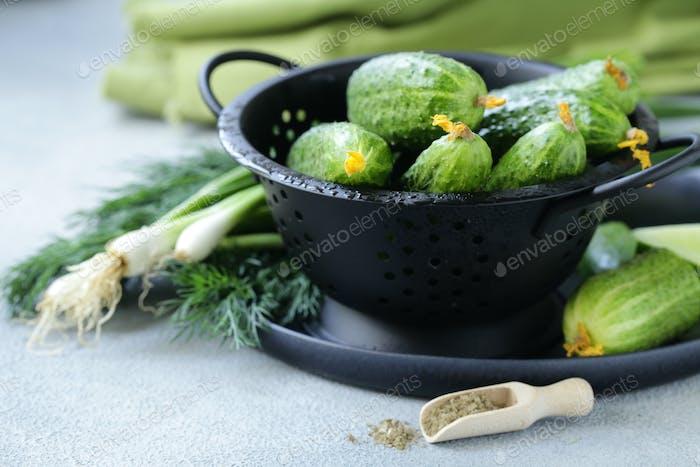 Organic Cucumbers for Salad