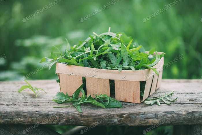 Fresh arugula leaves in bowl on a garden table.