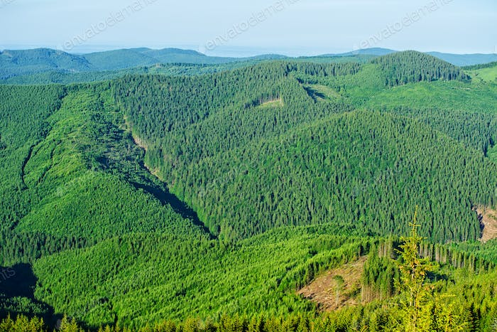 Forested mountains in a scenic landscape view