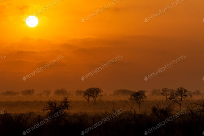 A sunrise over the game reserve, tree silhouettes in foreground.