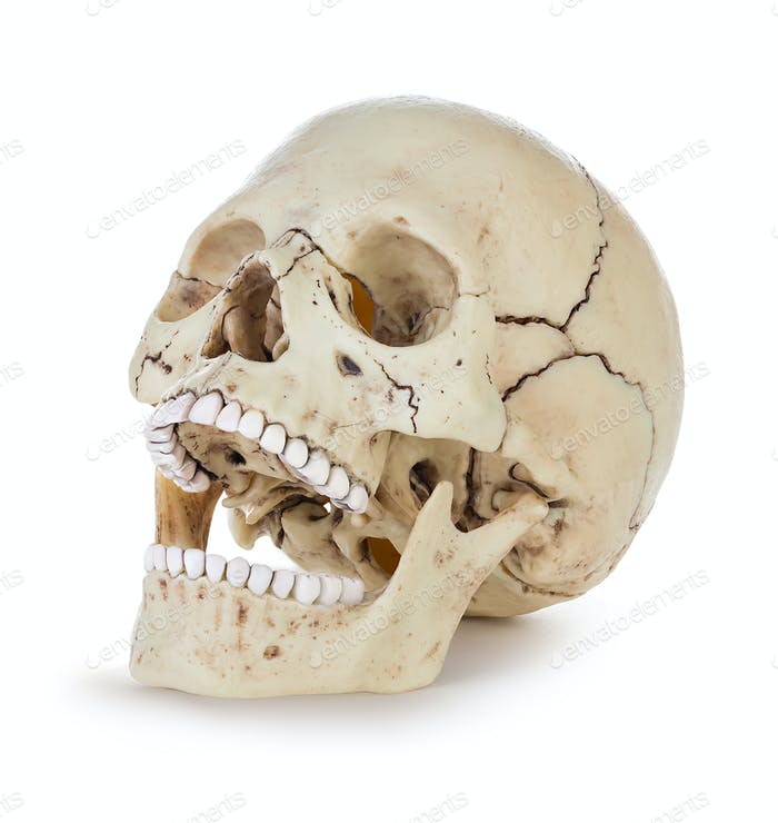 Human skull isolated on white background with clipping path.