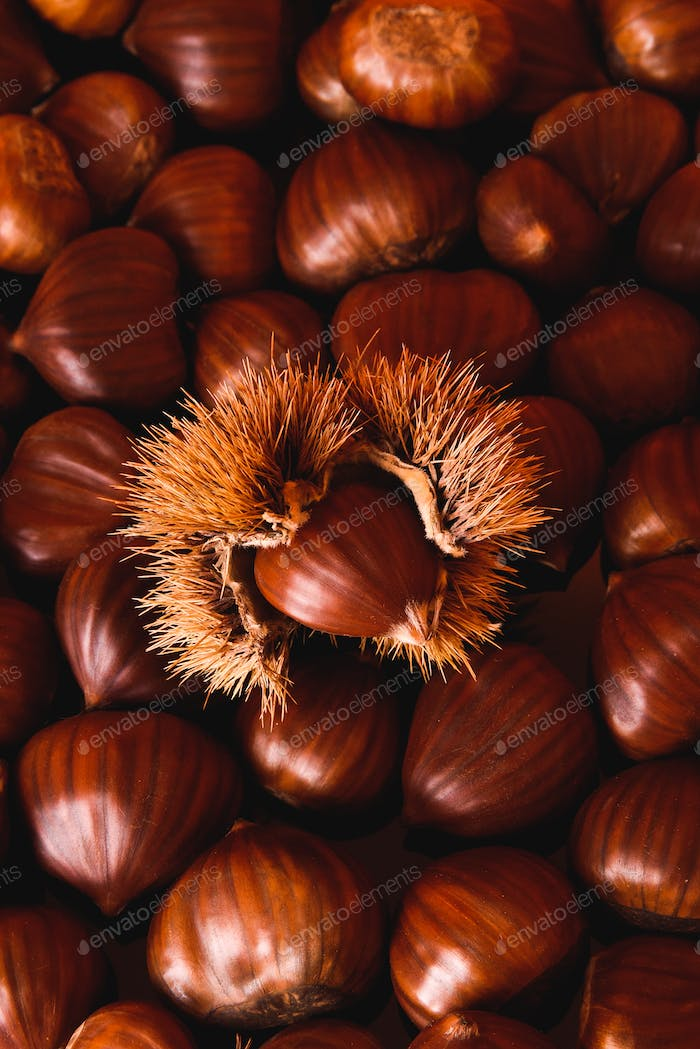 Ripe chestnuts close up. Raw Chestnuts for Christmas. Fresh sweet chestnut. Food background