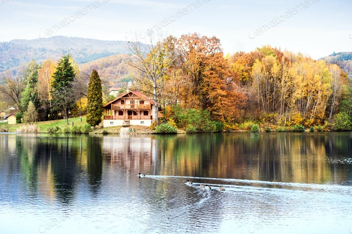 Ducks, lake and cottage in the autumn nature.