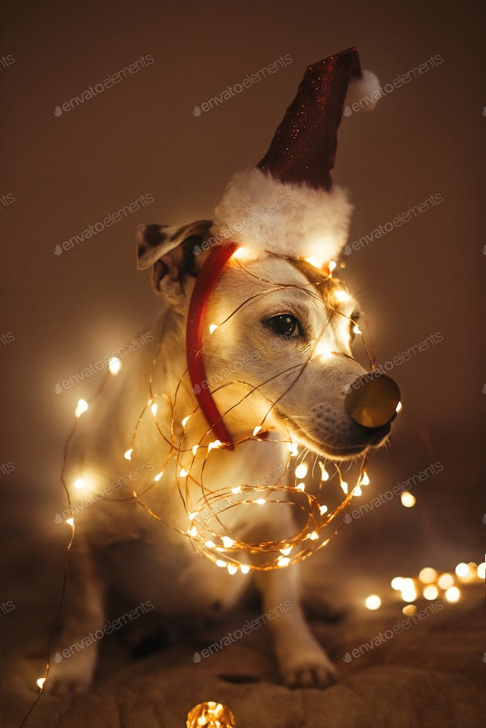 Funny dog in a New Year's cap, a sparkling garland in a dark room, masquerade