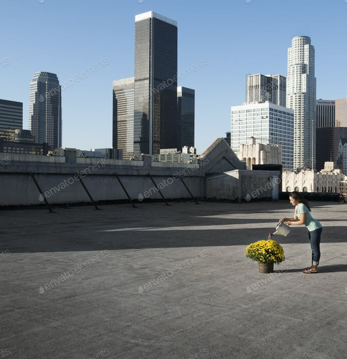 A woman using a watering can to water a flowering crysanthemum plant on a rooftop in the city.
