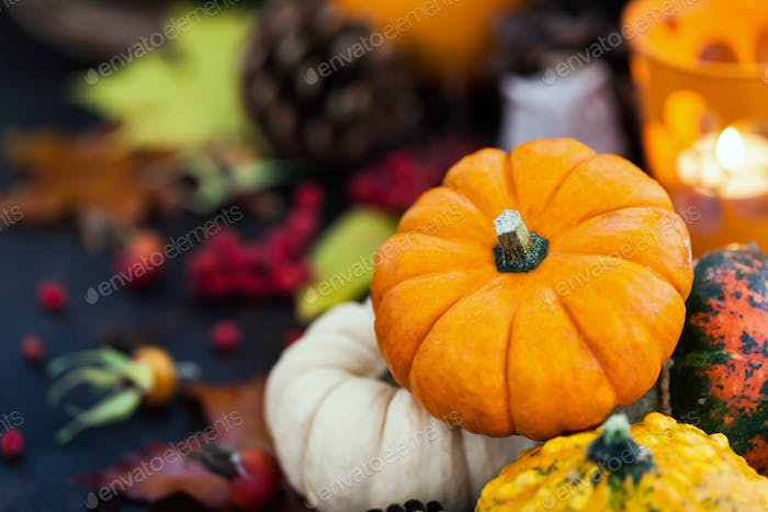 Autumnal colorful  pumpkins  on candle and fallen leaves backgro