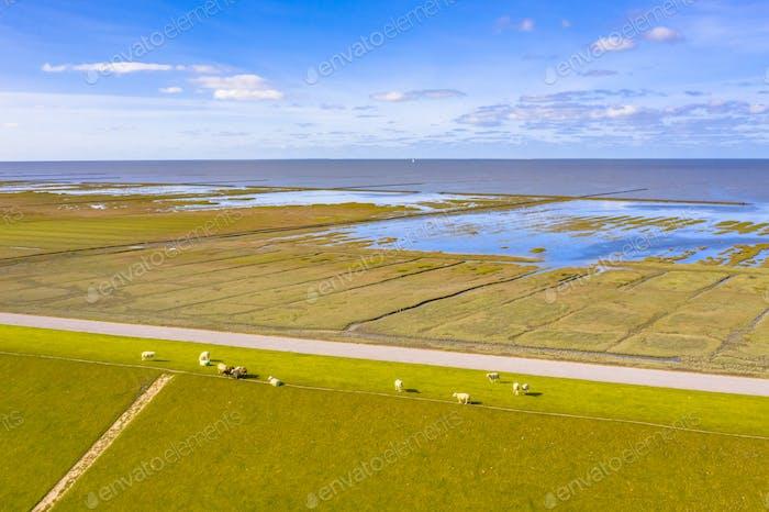 Aerial view sea dike national park Waddensea