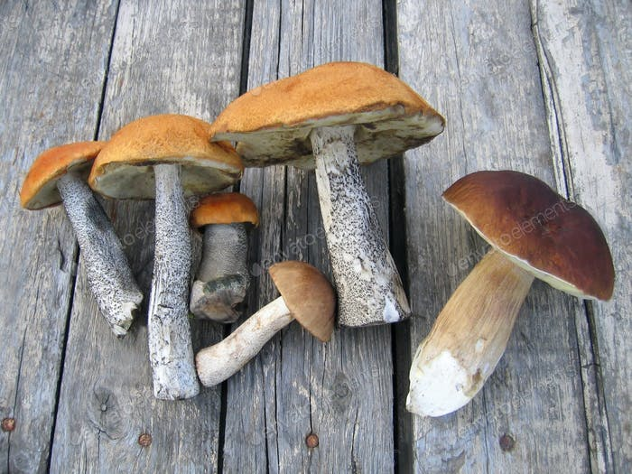 eatable mushrooms
